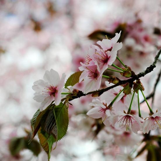 Frühling, Ferienende