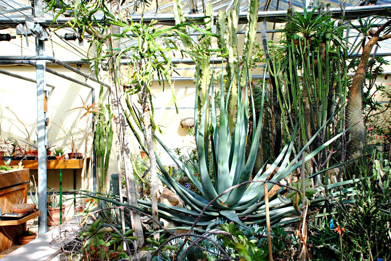 Durchatmen im Botanischen Garten