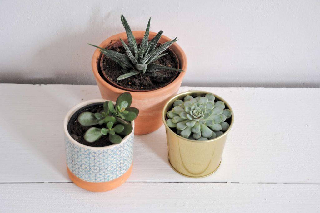 minimalismus Pflanzen