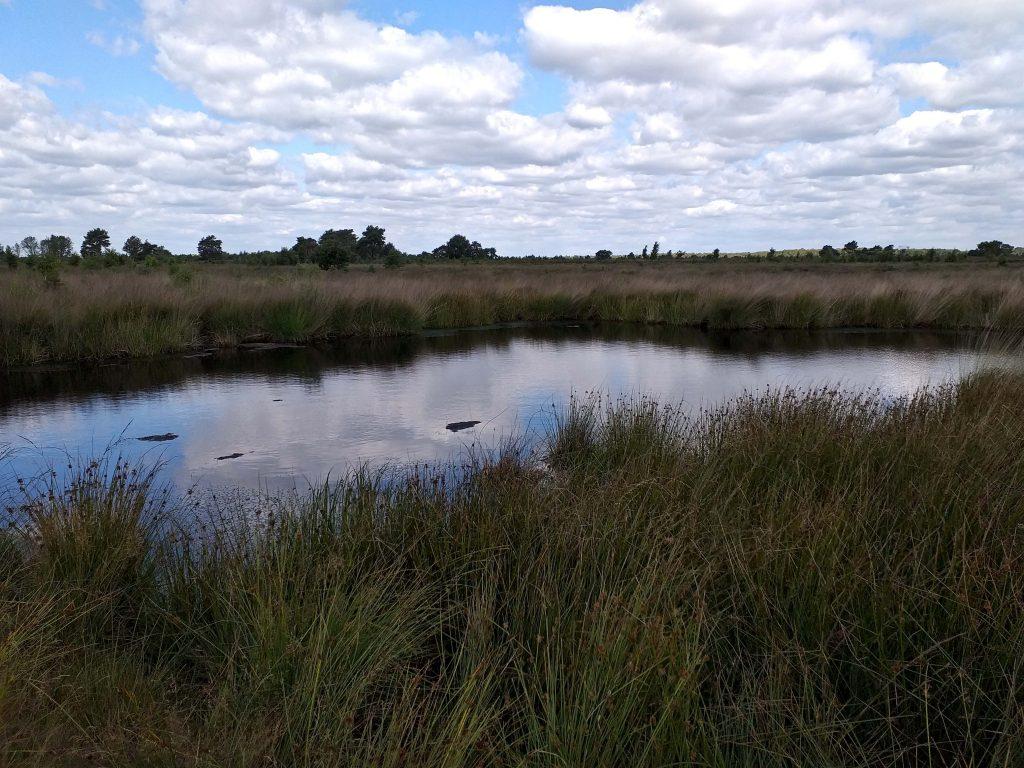 Naturschutzgebiet Niederlande De Groote Peel
