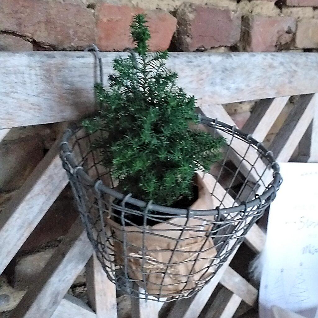 Adventstipps, kleiner Weihnachtsbaum